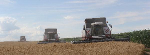 В Чебоксарском районе урожайность зерновых составляет 29,1 ц/га
